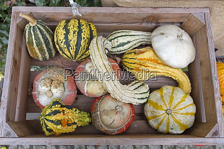 group of different pumpkins in a
