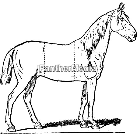 parts of a riding horse vintage
