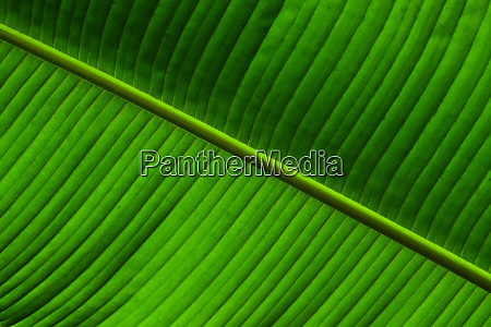close up background texture of green
