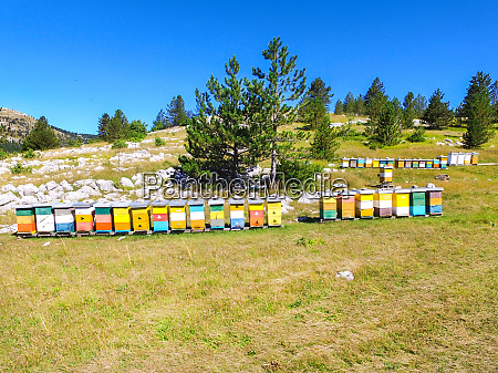 bee hives on hills of dinara