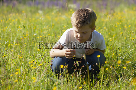 boy discovering flowers in meadows