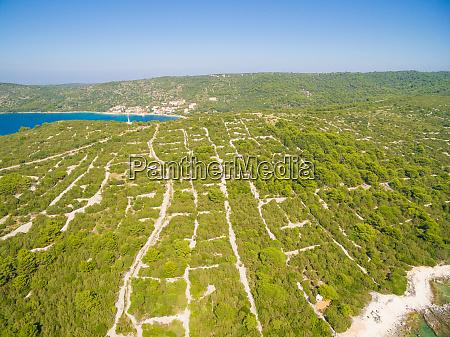 aerial view of green mediterranean vegetation