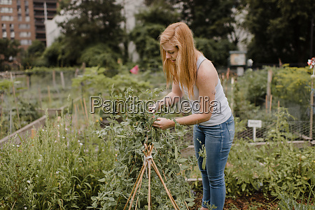 woman gardening at allotment