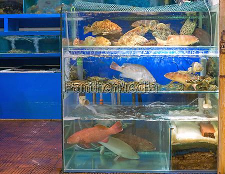 market live fish