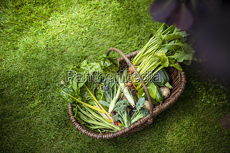 basket of courgettes broccoli swiss chard