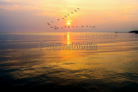 seagulls flying in a line through