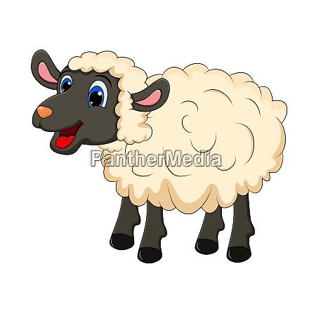 beautiful cute sheep isolated on white