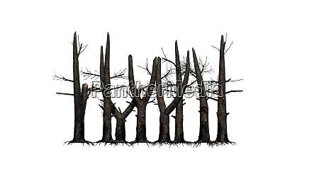several burnt trees