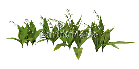 3d rendering lily of the valley