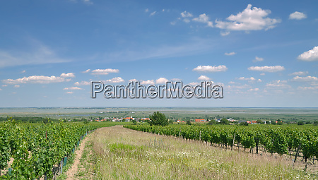 view to famous wine village of