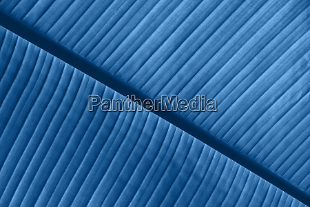 background texture of blue toned palm