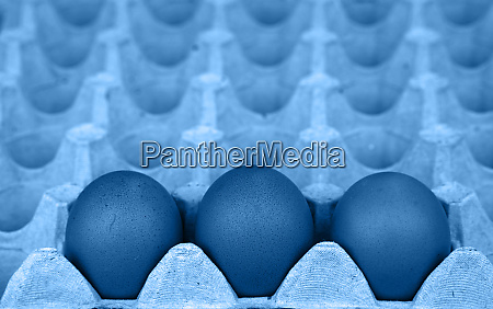 close up blue toned chicken eggs