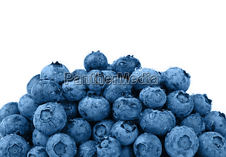 heap of fresh washed blueberries close