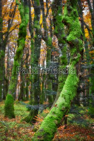 sleepy forest