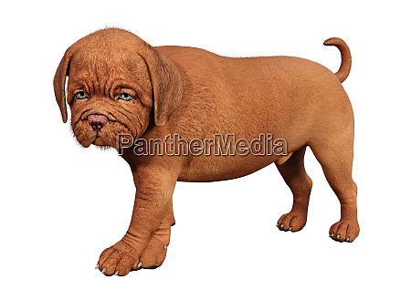 3d rendering puppy on white