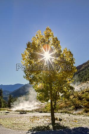 sun rays shine through leaves