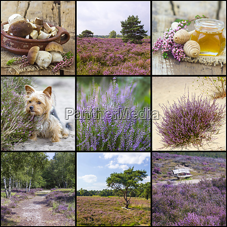 autumn collage with heather flowers