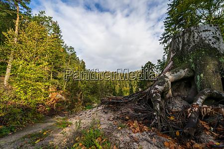 autumn landscape in the zittau mountains