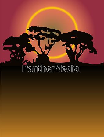 copse trees sunset background