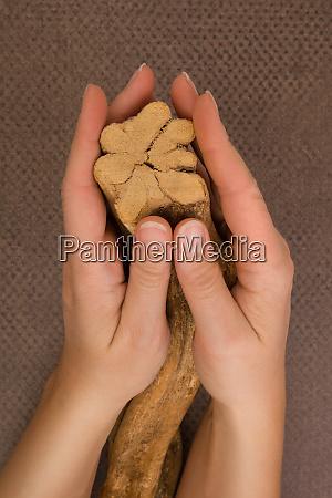 ayahuasca banisteriopsis caapi liana