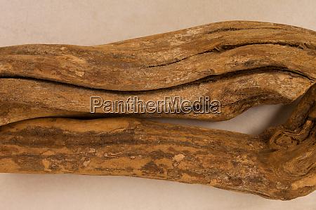 entheogen ayahuasca
