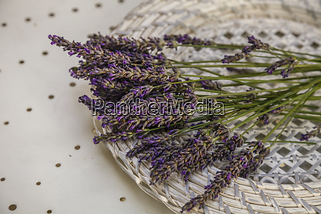 lavender still life in provence south