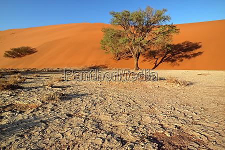 sand dune and trees namib