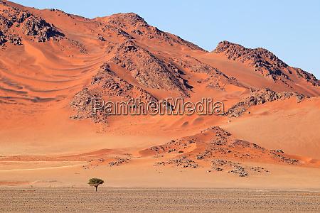 rugged dune landscape namib desert