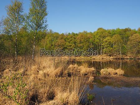 moor landscape lake