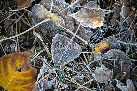 the first frost hoarfrost on the
