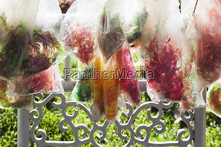 vietnam hue bags of dried ferns