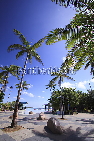 tropical palm trees provide some welcome