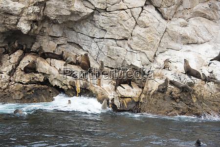 australia tasmania ile des phoques granite