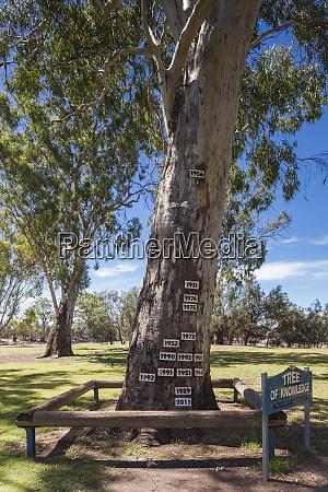 australia murray river valley loxton tree