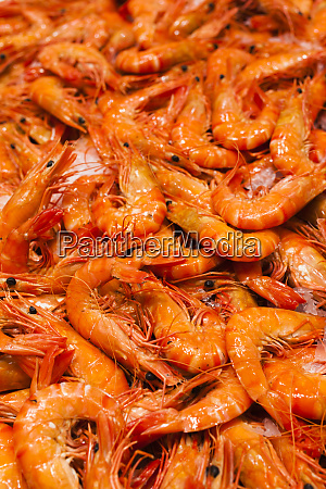 australia sydney fish market shrimp