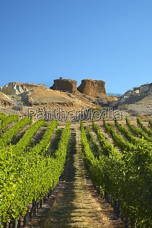 mt difficulty vineyard and historic gold