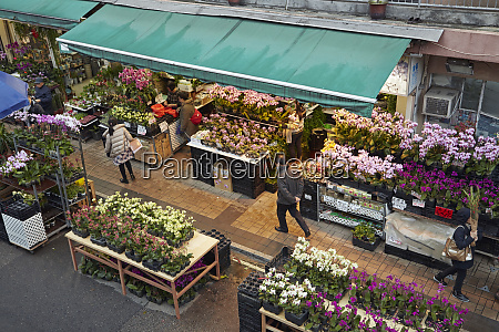 cut flowers at hong kong flower