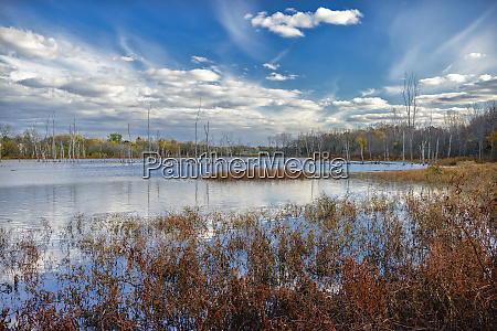 usa indiana the celery bog wetlands