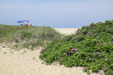 brant lighthouse beach nantucket massachusetts usa