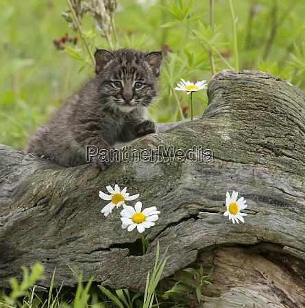 usa minnesota sandstone minnesota wildlife connection