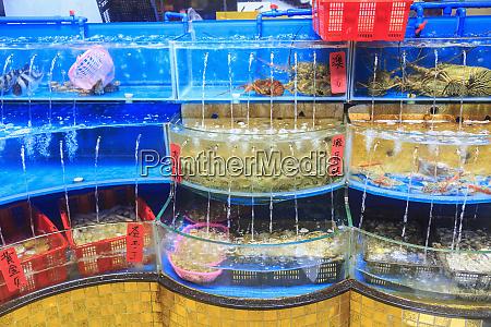 seafood on display huangsha aquatic products