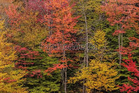 usa new york adirondack mountains autumn