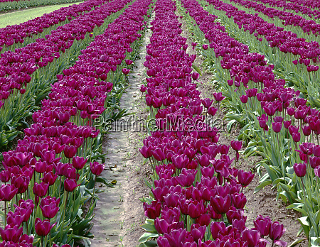 usa oregon willamette valley field of