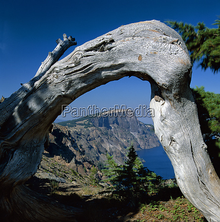 curved log frames crater lake and