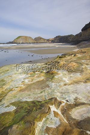 or oregon coast seal rock state