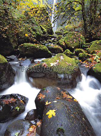 usa oregon ellowah falls moss covered