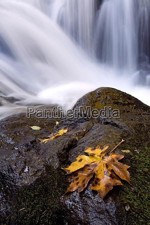 usa oregon sweet creek an autumn