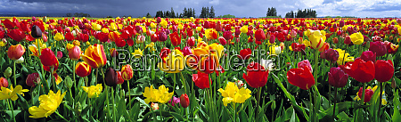 usa oregon willamette valley spring blooms