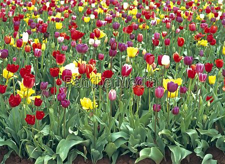 usa oregon willamette valley spring visitors