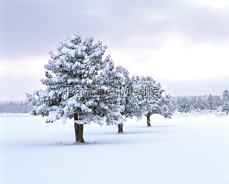 usa oregon bend a winter storm